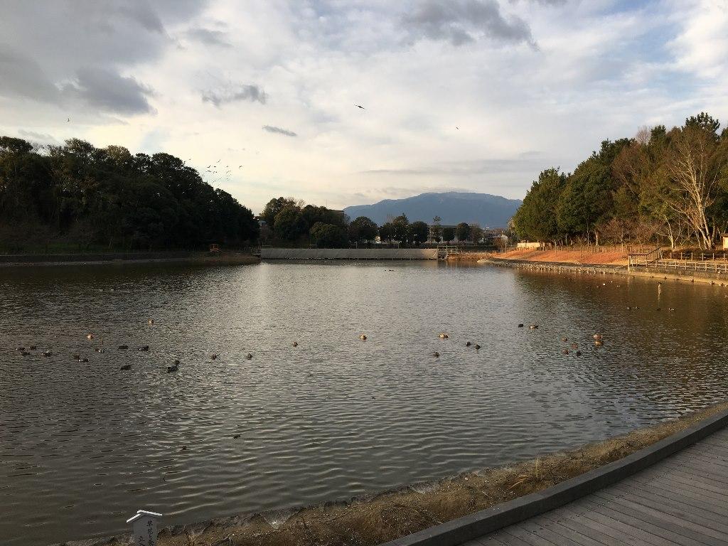 橿原神宮 (23)