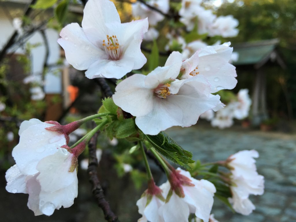 玉津島神社1 (7)