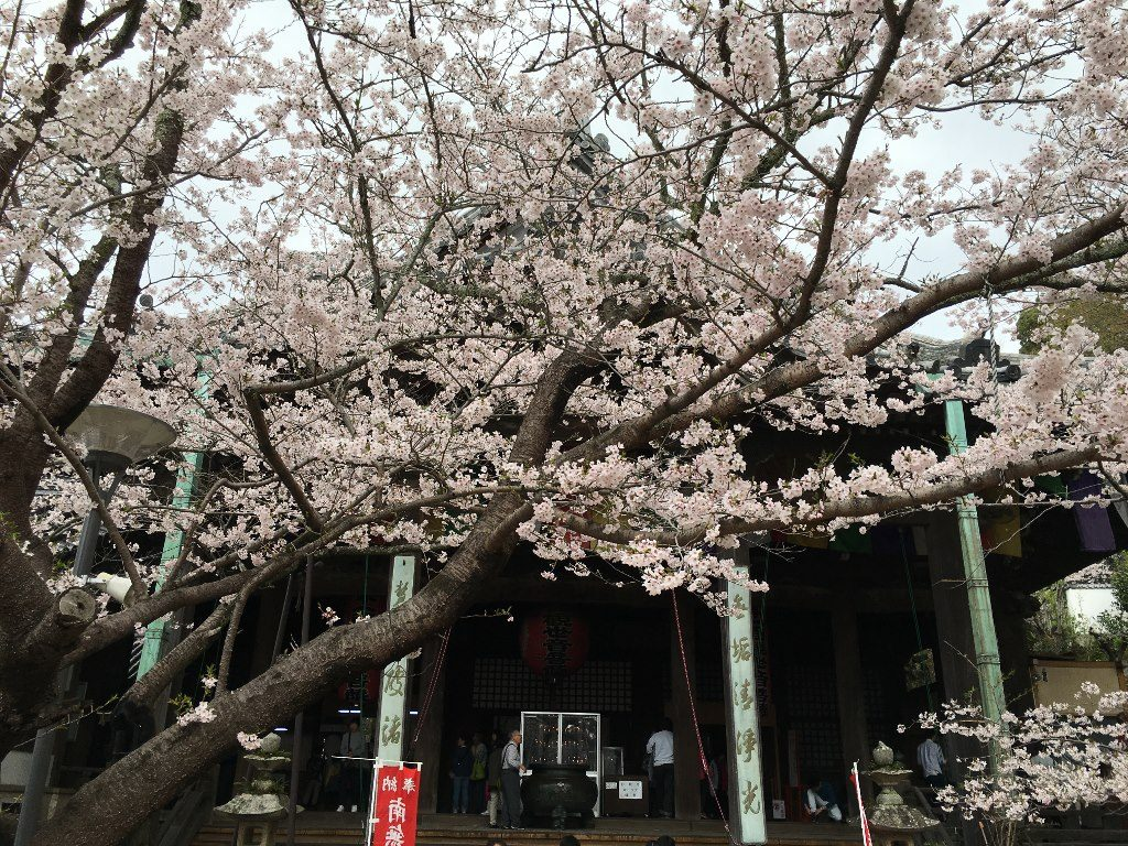 紀三井寺 (25)