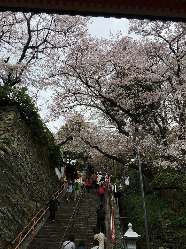 紀三井寺 (8)